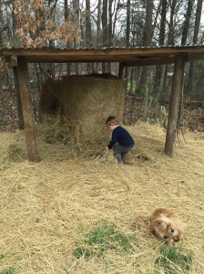 Exploring the hay