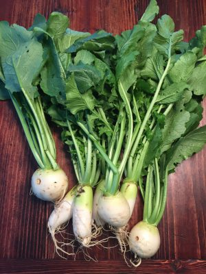 daikon-and-turnips